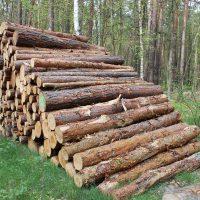 Holzpolter Nadelholz im Wald